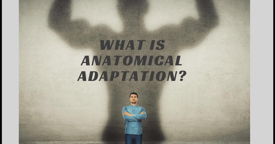 anatomical adaptation