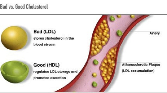 what is cholesterol What is Cholesterol?