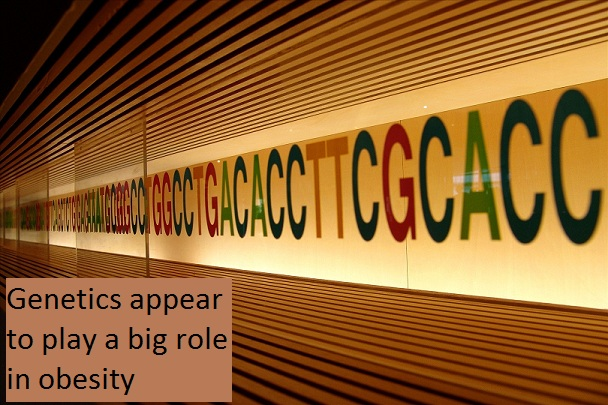 genetics seem to play a big role in obesity Causes of Obesity and Weight Gain?