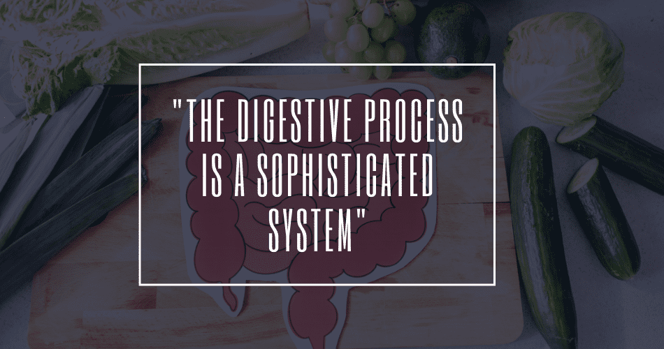 digestive process quote